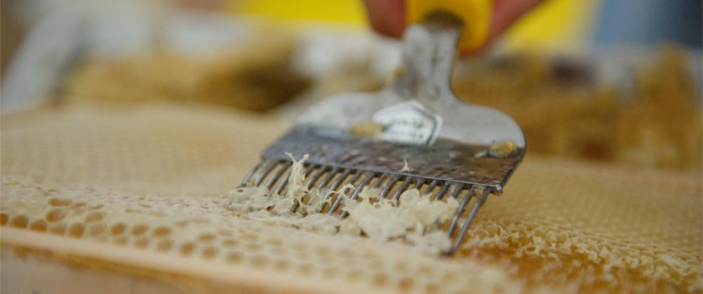 Entdeckeln einer reifen Honigwabe