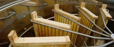 Entdeckelte Honigwaben im Schleuderkorb